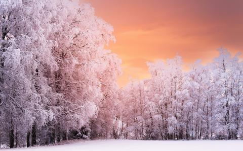 冬季森林日落