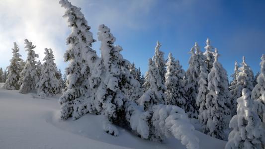 雪树HDTV 1080p