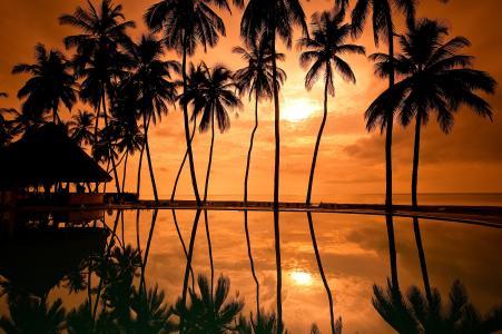 棕榈树,日落,海岸,度假村,高清