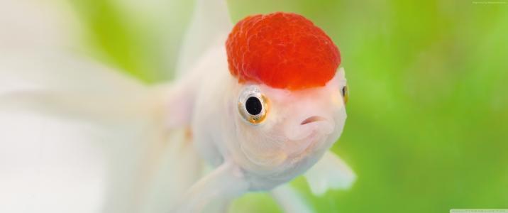 脑,鱼(水平)