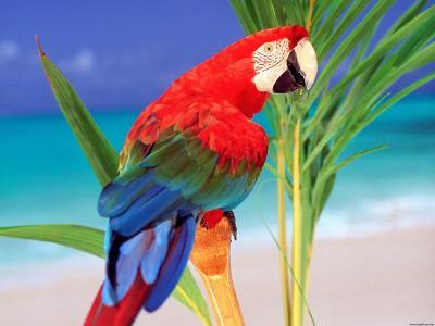 热带颜色鹦鹉