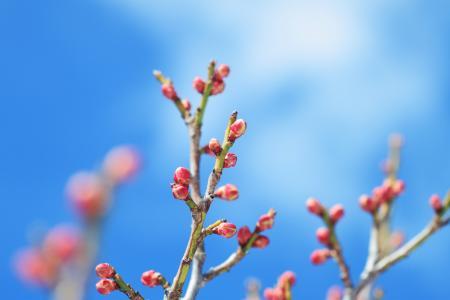 芽,开花,宏,4 k