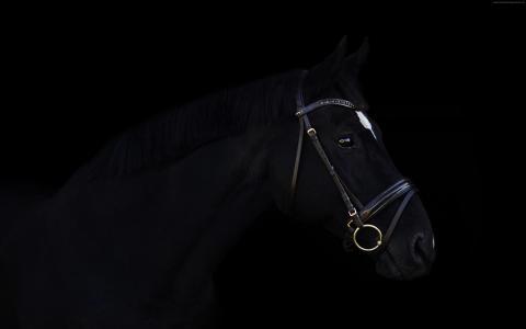 马,可爱的动物,黑色,4k(水平)