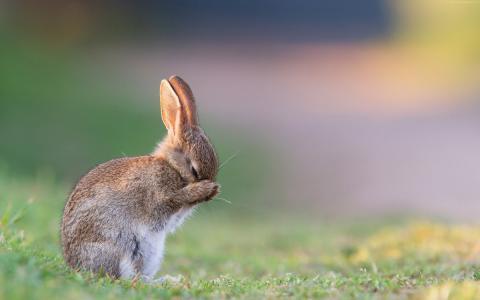 兔子,可爱的动物,4k(水平)