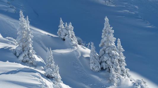 雪,冬天,树木,4k(水平)