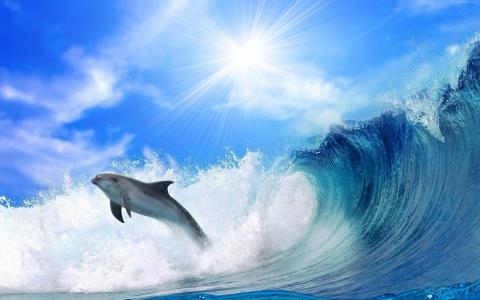 海豚,海洋,4k(水平)
