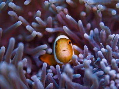 小丑鱼,5k,4k壁纸,Gili,岛,巴厘岛,印度,太平洋,水下,潜水,旅游,橙色,海洋生物,海,海洋,世界上最好的潜水地点(水平)