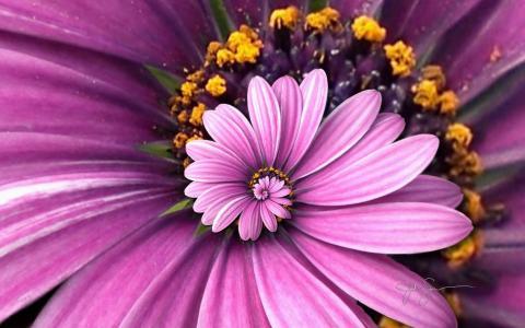 紫色的Droste